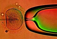 Emancipate the Embryo! Britain set to enter 'brave new world'
